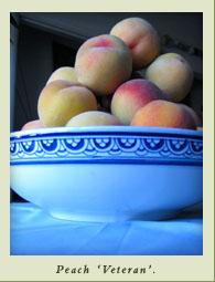 peach_veteran.jpg