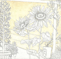 londonset_sunflowers_sm.jpg