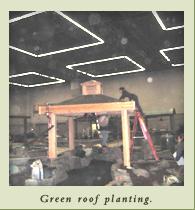 green_roof_planting.jpg