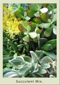 succulent_mix.jpg