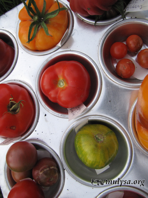 tomatos_tasting.jpg